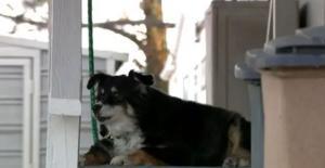 ABD'de Bir Köpeğe 5 Milyon Dolar Miras Kaldı